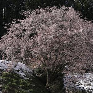 東山道沿いで目に付いた花樹