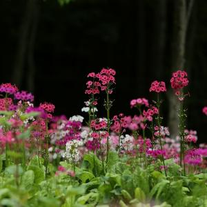 旬の花を撮って楽しんできました。