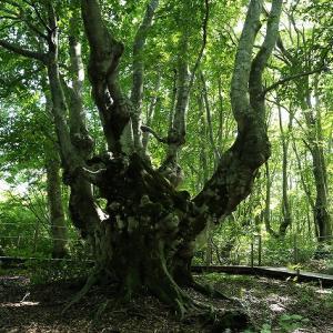 奇木・変木がいっぱい、あがりこの森