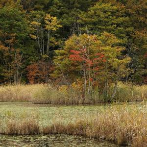 今日19日の裏磐梯・・・檜原湖周辺紅葉は?