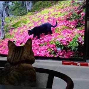 TVの猫と我が家の猫