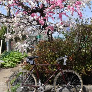 Yahoo!ブログ & CycleStyle Cafe ありがとう!!