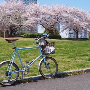 最強の花見サイクリング!!