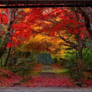 京都・亀岡 - とある竹林に囲まれた寺の紅葉