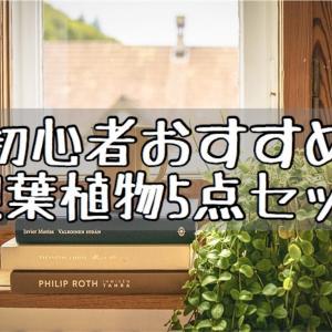 【インテリア】お試し観葉植物5点セット!Amazonでランダムで届く!