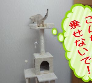 激安キャットタワーを買ってみました!
