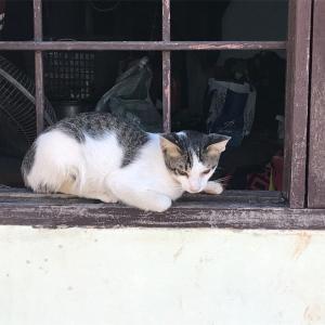 牧場ネコ…暑い日が続き始めました…