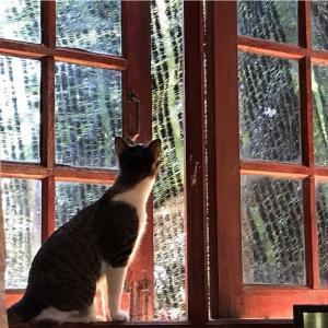 イサーンの田舎の猫の日常…