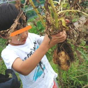 我が家の体験育児!自然と遊ぼう!畑と虫とメダカ
