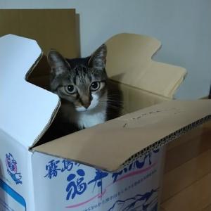 箱、大人気の巻