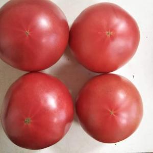 トマトのお尻から甘さを知る方法【前編】