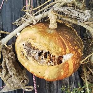 ほら…horror…かぼちゃの季節…