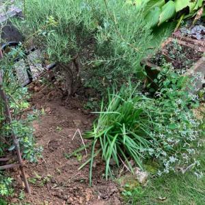 朝の庭で…
