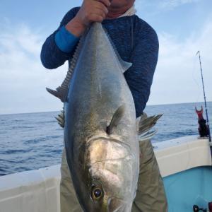 本日の泳がせ釣りはカンパチのみでした!鹿児島錦江湾海晴丸