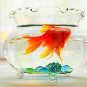 【水槽のある生活】アクアリウムの「意味」と「良さ」と「注意点」