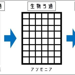 【初心者向け】アクアリウム水槽のフィルターの選び方について説明する 〜種類・特徴〜