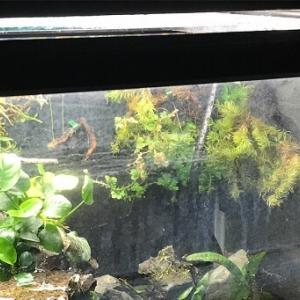 生体がいる水槽で白い水垢汚れを安全に落とす方法 〜ガラス水槽・アクリル水槽〜