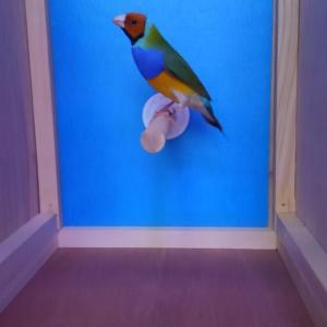 小鳥いい友クラブ即売会