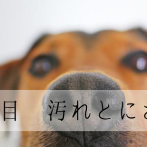 インビザライン8日目 汚れとにおい (1/22)