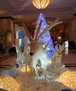 クリスマスが近いので名古屋でもイルミネーションが輝きはじめました②