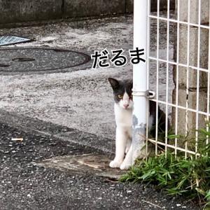 眼光鋭い猫が・・・