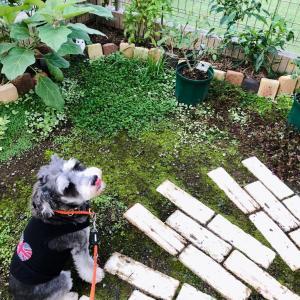 お庭でペロンチョされても、、、