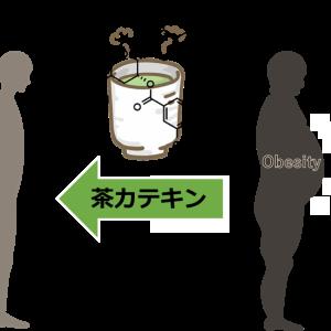 茶カテキンの脂肪に対する作用 その1