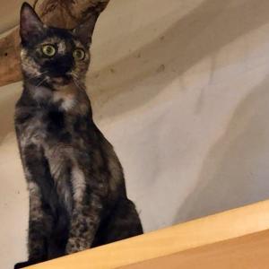 人生ではじめて猫カフェに行ったら異空間すぎて偏差値2になった話