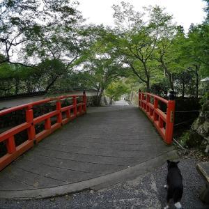 京都 三千院(2)