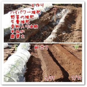 今日の菜園(土作り5)