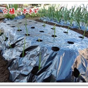 今日の菜園(ポット苗準備)