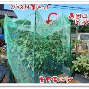 今日の菜園(被害チェック)
