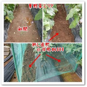 今日の菜園(追肥と草対策)