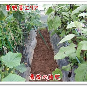今日の菜園(追肥だけ)
