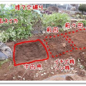 今日の菜園(撤収準備着々)