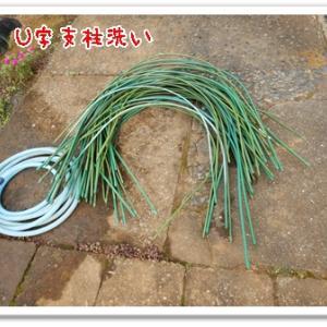 今日の菜園(U字支柱洗い)
