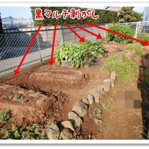 今日の菜園(マルチ剥がし)