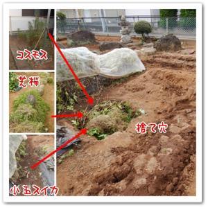 今日の菜園(暑さ今季一番)