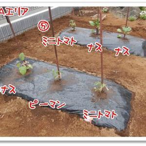 今日の菜園(種蒔き植付け)