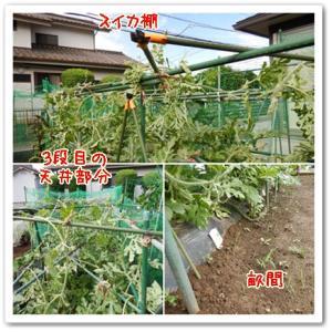 今日の菜園(つるネット)