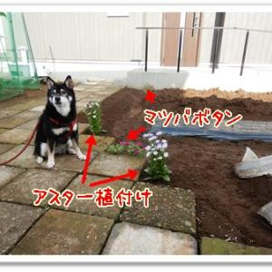 今日の菜園(台風被害なし)
