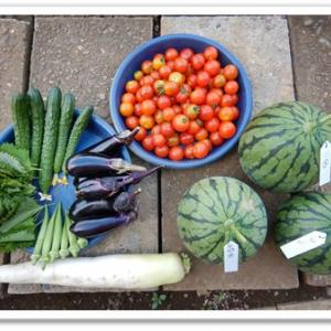 7月の収穫実績