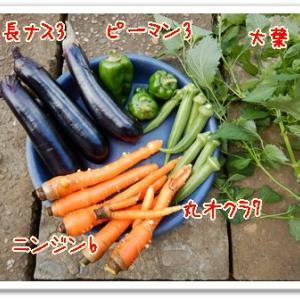 今日の菜園(倉庫片付け)