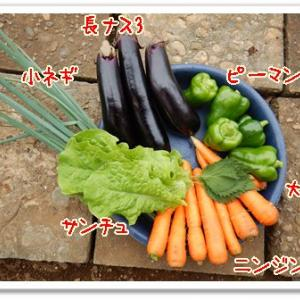 今日の菜園(収穫運搬)
