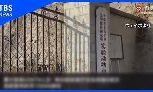 中国 動物用ワクチン菌漏出事故、感染者1万人超に