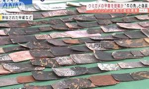 ウミガメの甲羅→牛の角と偽り密輸か 税関で発覚(2021年2月25日)