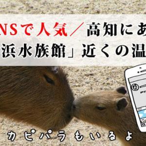 【スッキリ!で紹介】SNSで人気の「桂浜水族館」近くの温泉宿