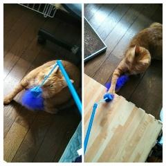 猫の情操教育?