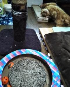 猫のツメトギ
