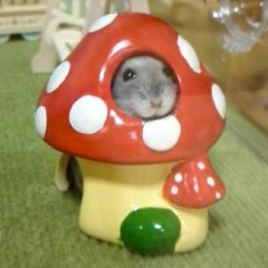 マルちゃんもキノコハウス!